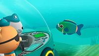 El pez loro pirata