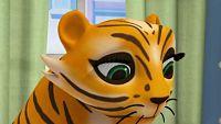 Tiger teeth trouble