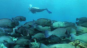 Paraísos submarinos: Malasia y las islas Fidji