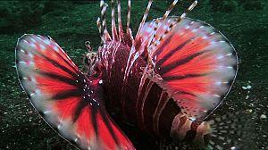 Paraísos submarinos: Resumen de lo mejor de la serie