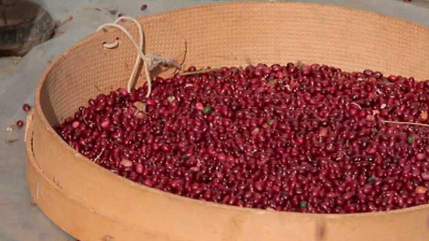 Alubia roja de Anguiano