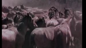 O Curro de Mougás