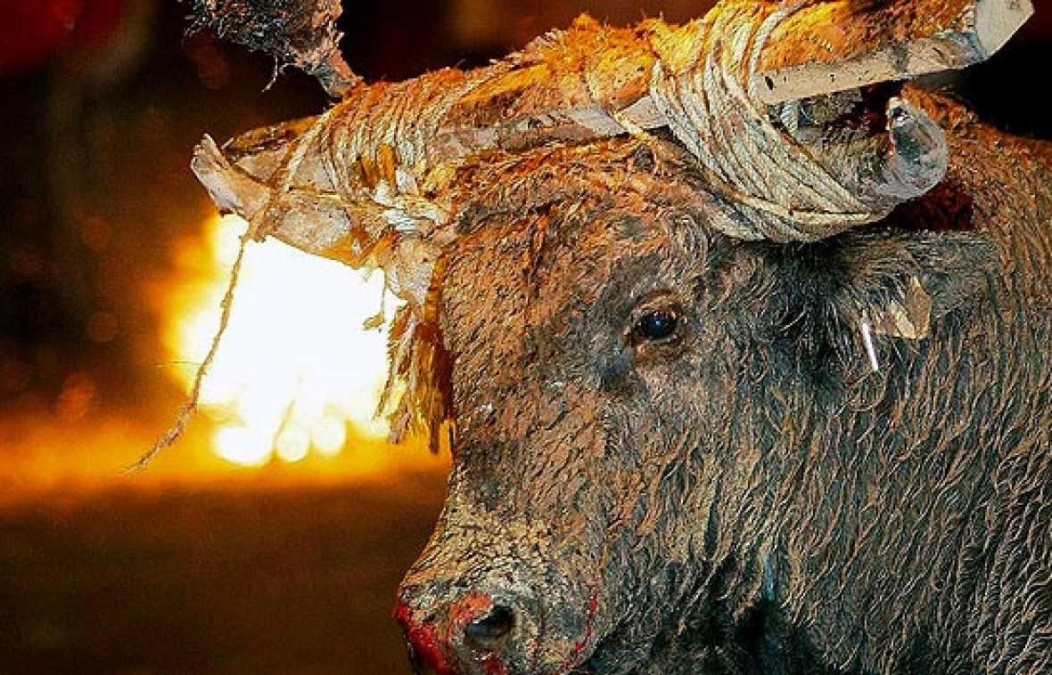 Medinaceli celebra su 'Toro Jubilo'