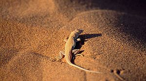 Velocidad mortal 2: El desierto