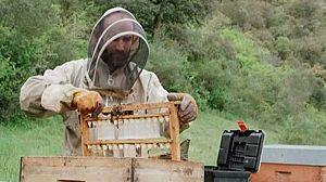 Rubén es apicultor