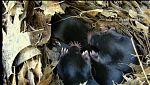 Animalades - Terres altes