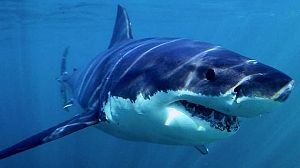 Tiburón. Episodio 1