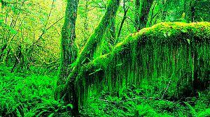 Colombia salvaje: El Chocó, la costa salvaje