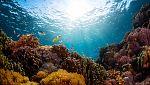 Grandes documentales - Pacífico: Pueblos de selva y ceniza