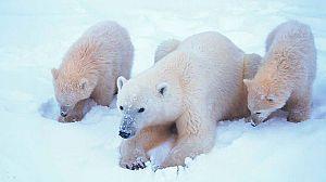 El mundo polar