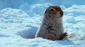 Alaska Salvaje: Invierno