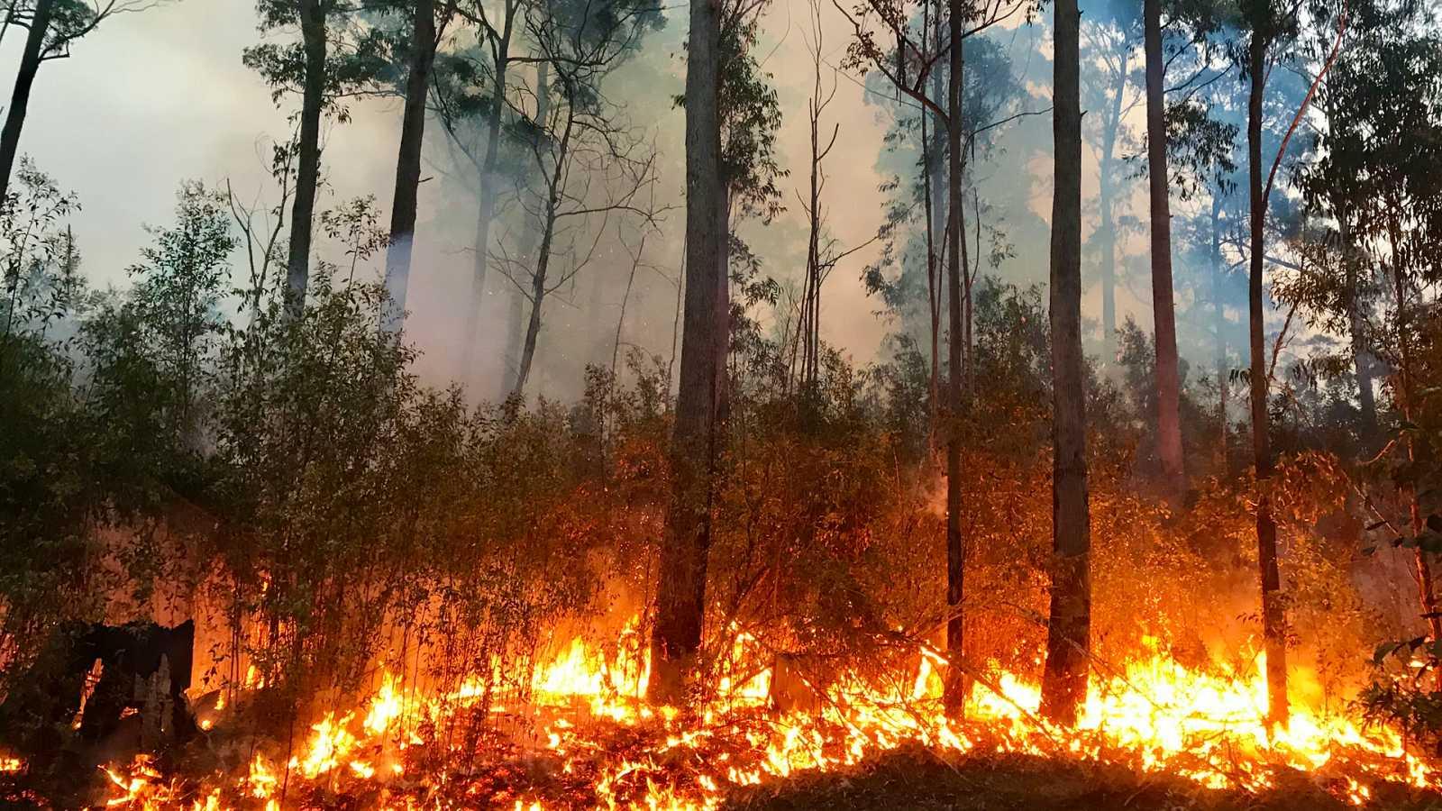 El Bosque Protector Incendios Forestales