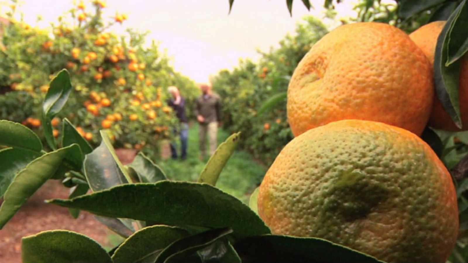 Para todos los públicos ¿Cuántos tipos de mandarinas conoces  reproducir  video 70a327cfa56