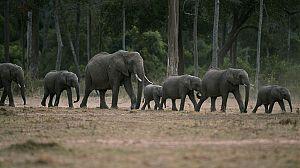 África salvaje: Los elefantes de Mashatu