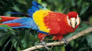 Costa Rica, el arca de la Naturaleza