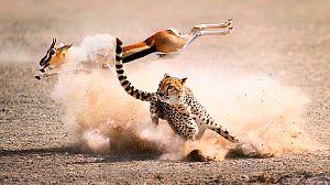 La caza: Viviendo con depredadores
