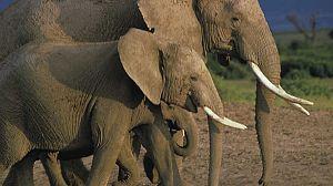 Parques Naturales de África: Parque de los Elefantes de Addo