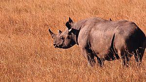 Grandes Parques Naturales de África: Isimangaliso