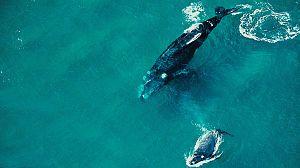 Secretos de la vida salvaje: Secretos del mundo acuático