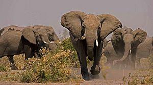 Alma de elefante