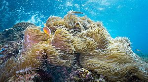 El planeta bajo el agua: Tierra adentro
