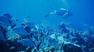 El planeta bajo el agua: El planeta en la oscuridad