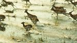Unidos por el Patrimonio - Delta del Okavango (Botswana)