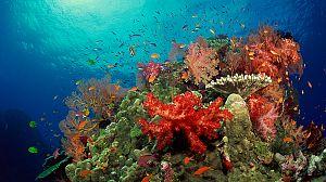 El planeta bajo el agua: Arrecifes