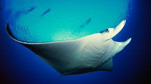 El planeta bajo el agua: Los gigantes del mar