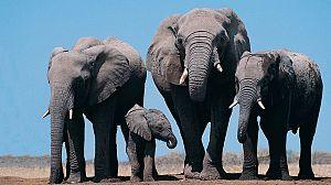 Relatos de Zambia: El valle de los elefantes