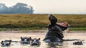 Relatos de Zambia: El río de los hipopótamos