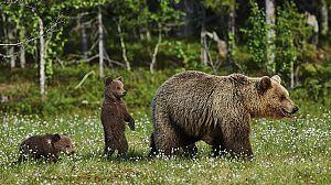 En los bosques de Escandinavia (1ª parte)