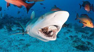Peligro, zona de tiburones