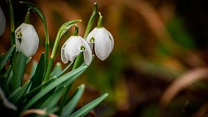 Historias de primavera