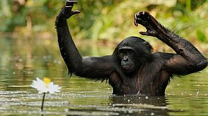 África extraordinaria: El despertar de Virunga