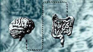 El vientre, nuestro segundo cerebro