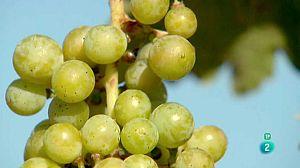 Un néctar sostenible