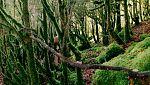 El señor de los bosques - Programa 2