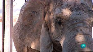 Zoo de Barcelona: La cura dels elefants