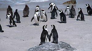 La ciudad de los pingüinos: Georgia sur