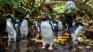 Nueva Zelanda salvaje: Recién llegados