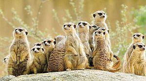 Superprogenitores del reino animal: Echando una mano