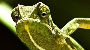 Velocidad asesina: La selva