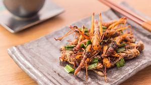Comida al descubierto: Insectos, leche y aceite de trufa