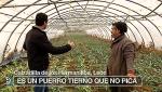 España Directo - 23/01/18