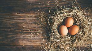 Comida al descubierto: Sal, huevos camperos y haggis