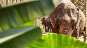 Supervivencia extrema: Peleas en la selva
