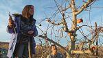 Aquí la tierra - ¡Ojo con la rama que podas!