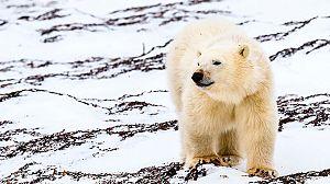 El aliento del Ártico. El Norte salvaje