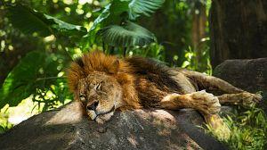 Animales a través de la noche: Durmiendo en el zoo